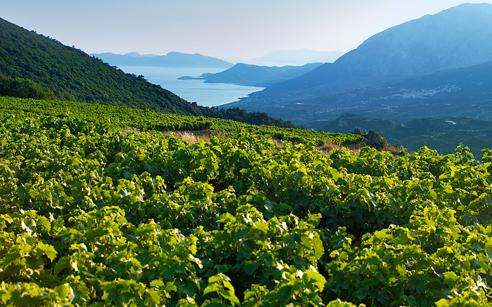 AEGEAN_VINEYARDS_01_ENALLAKTIKH