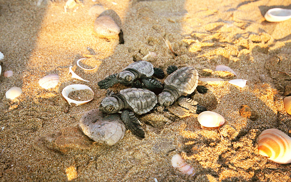 brothers-and-sisters-Papafitsoros