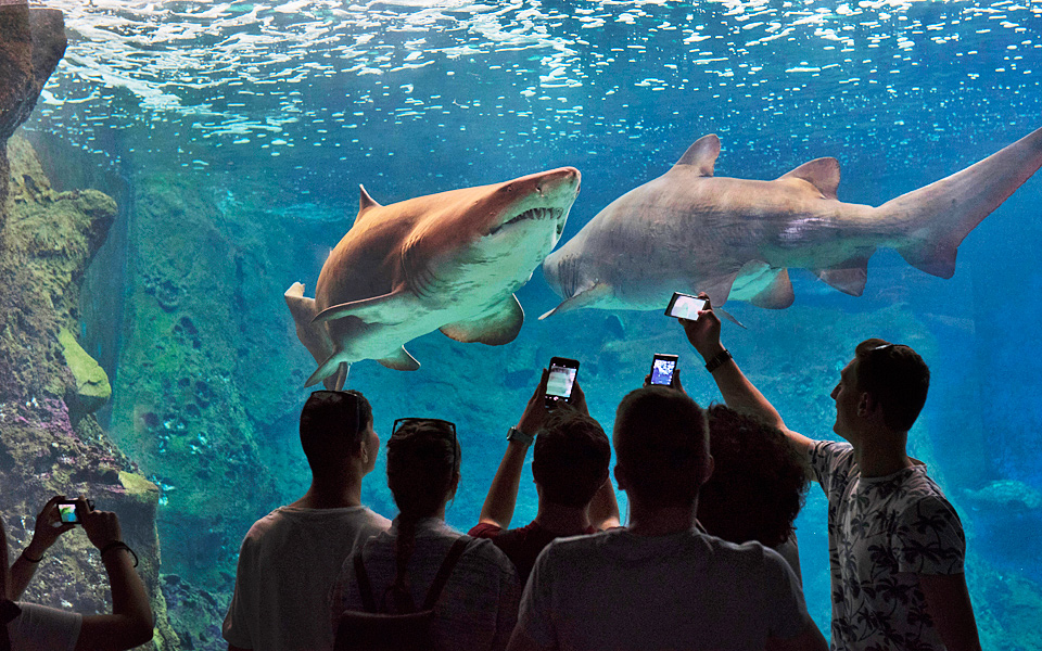 minoan_aquarium_01_zavos