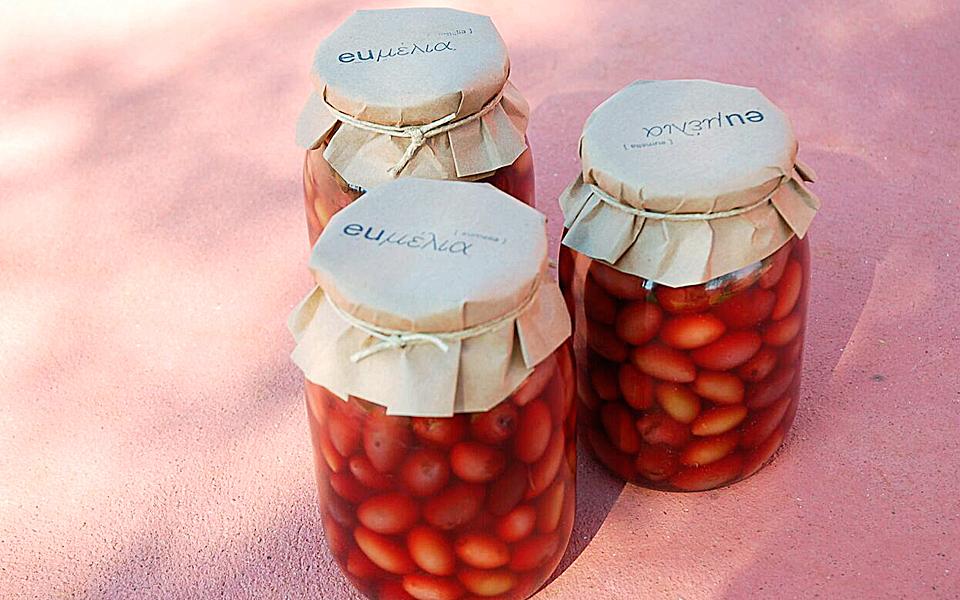 blog_olive_harvest_02