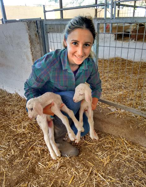 BLOG SHEEP FARMER 02