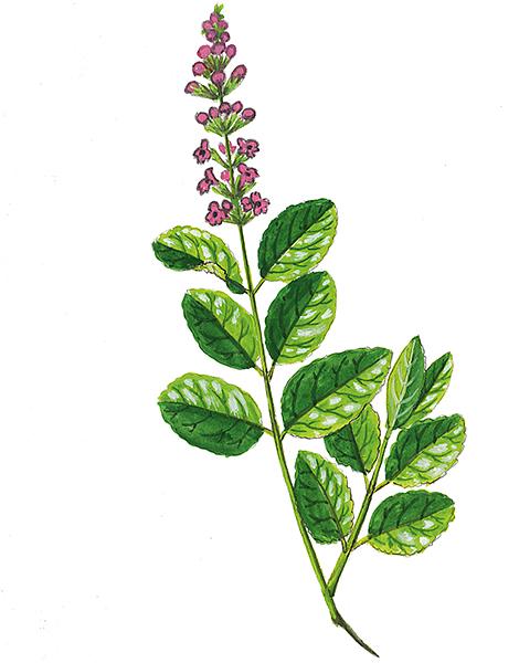 Hippocratic Wealth: 8 Medicinal Plants Native to Kos - Greece Is