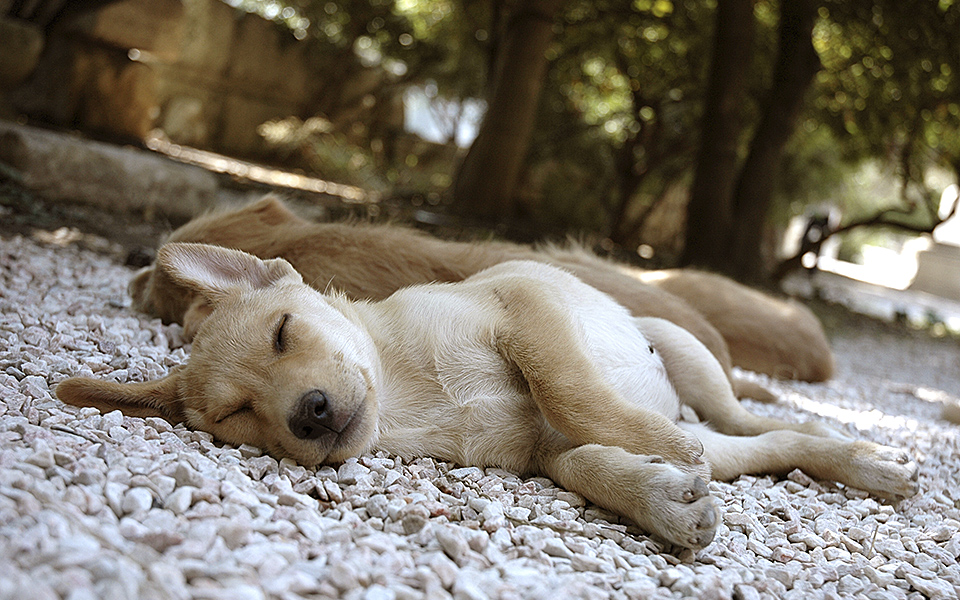 shutterstock_38084872_SLEEPINGPUPPY