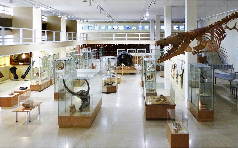 Museum-Paleontology-Athens-Univ