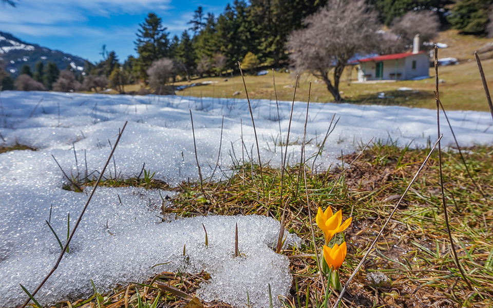 snow_flower_shutterstock_767816638