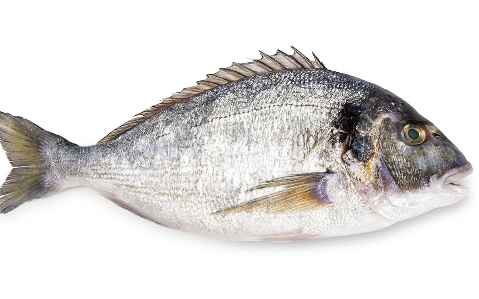 Greek Fish Translated: A Guide to Greece's Seafood - Greece Is