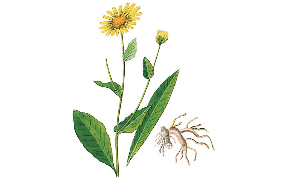 They Were Right: 7 Medicinal Plants Used by Ancient Greek