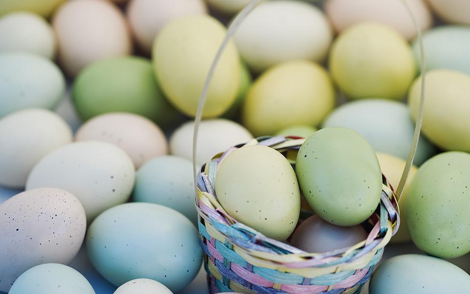 eggs_shutter