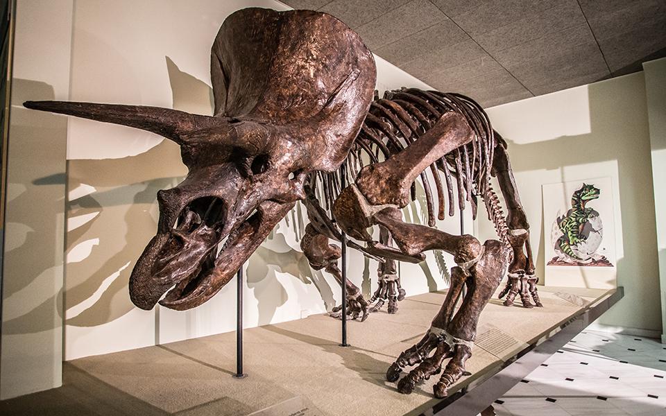 <h5>Goulandris Natural History Museum & Gaia Center </h5>