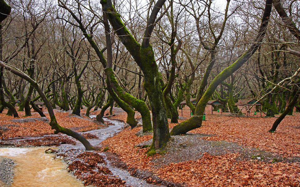 <h5>National Helmos-Vouraikos Park</h5>
